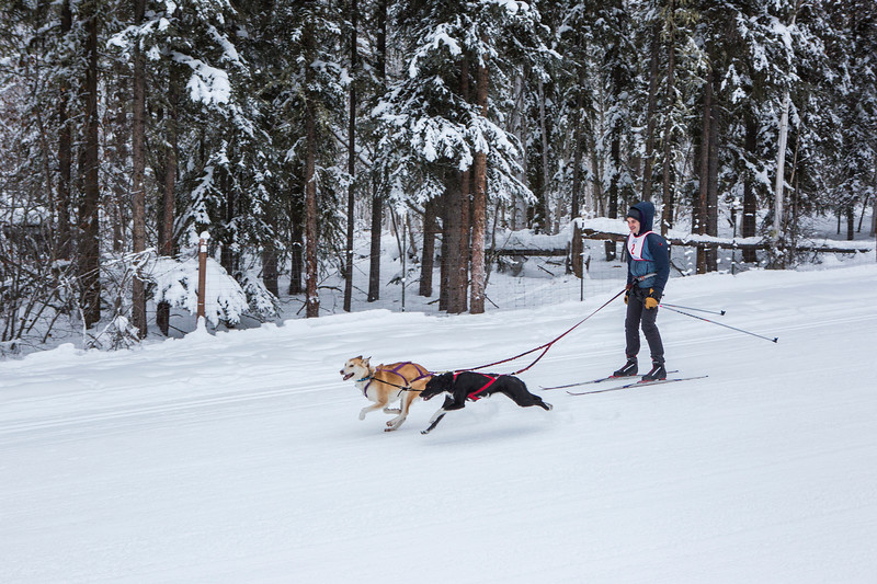Earth science student Brian Reggiani skijours with his dogs Funky and Olive during a race sponsored by Alaska Skijoring and Pulk Association at the Fairbanks campus.