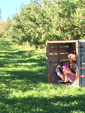 2017 apple picking