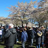 Sakura festival in Copenhagen, 30 April 2017