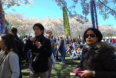 Sakura festival in Copenhagen, 30 April 2017