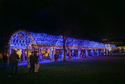 Patrons walk around the newly lit blue trellis