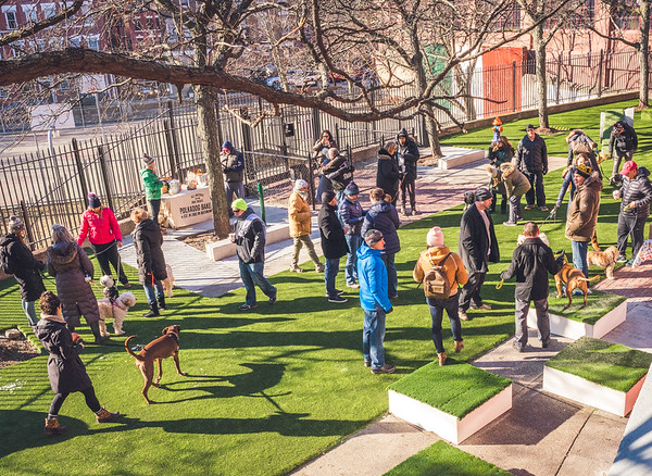 Dozens enjoy the new dog park