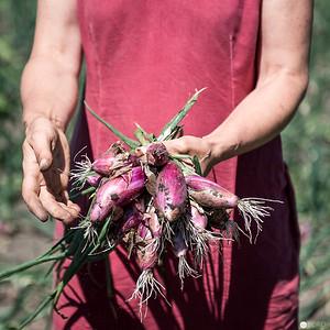 Priska Stekovics erklärt, wie man die weltbesten Schalotten schält