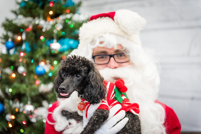 Santa photos for Freedom Dog Rescue!