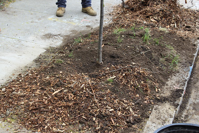 20170429 Stanwood Street Tree Planting