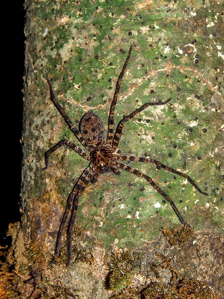 15 cm spider on the shelter pillar.