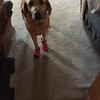Poly with new boots