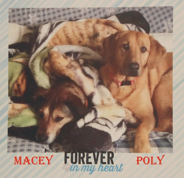 RIP in peace Macey