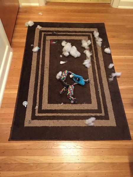 Taser keep it all on the rug