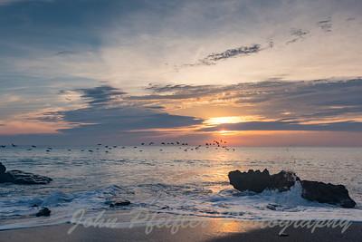 Bird Sunrise Coral Cove