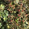Abundance of black berries!!!!