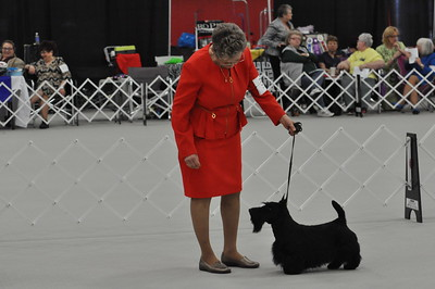 Heart of America Scottish Terrier Club Specialty 2018