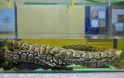 An exhibit in the Snake Park