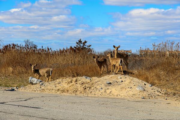 Smith Point Long Island