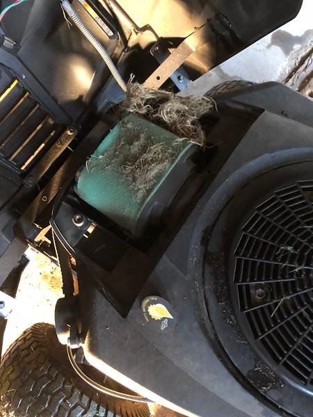 Mice found Tigs tractor