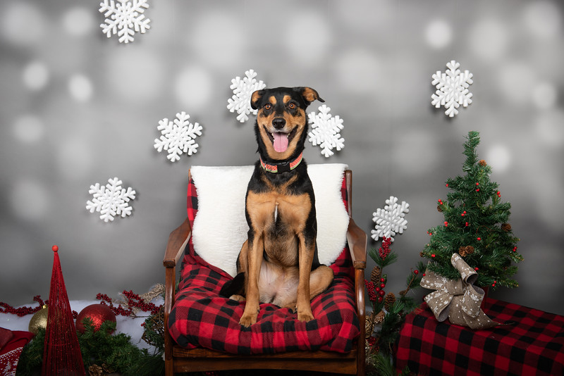 Masters N Dogs Christmas - 08.12.2019
