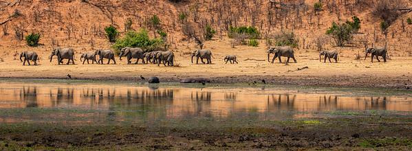 Elephants on parade at Gonarezhou National Park