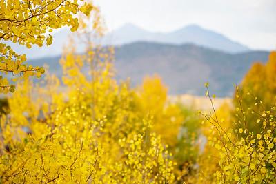 Fall in Frisco