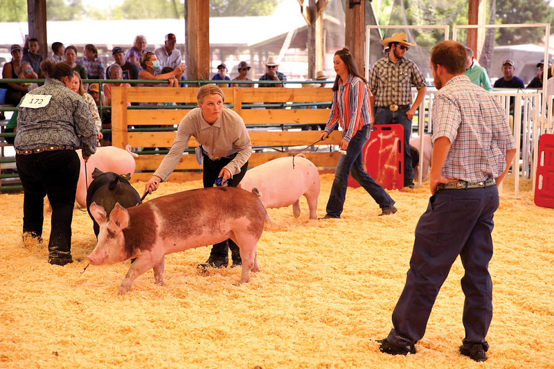 Matthew Gaston | The Sheridan Press <br /> Betty Journey maintains eye contact with the judge while manuevering her pig back and forth in front him during the senior swine showmanship competition at the Sheridan County Fair Thursday, July 30, 2020.