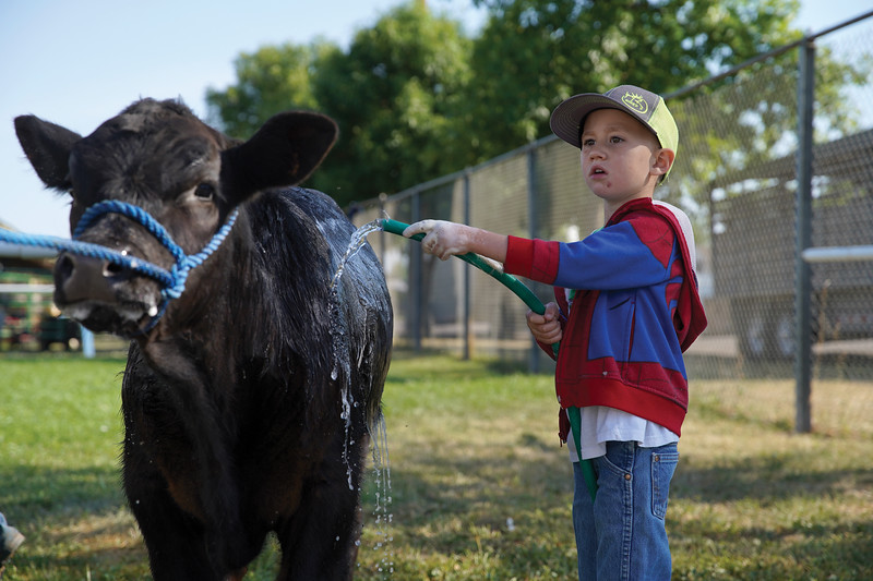 Matthew Gaston | The Sheridan Press <br /> Five-yer-old Chet Edwards hoses down his calf, Earthshocker, at the Sheridan County Fair Saturday, Aug. 1, 2020. Earthshocker was named after Edwards' favorite monster truck.