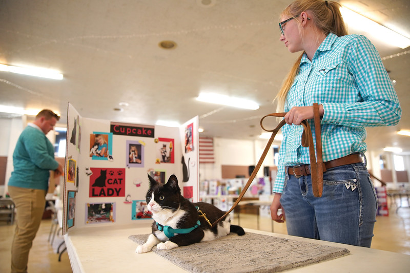 Matthew Gaston | The Sheridan Press   <br /> Kylee Lamb and her cat, Cupcake, patiently wait for judging during the senior showmanship competition during the Sheridan County Fair cat show Wednesday, July 29, 2020.