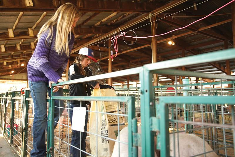 Matthew Gaston | The Sheridan Press   <br /> Grace VanDyke, left, climbs into the pin to help her sister Faith VanDyke sprea saw dust shavings for Faith's pigs at the Sheridan County Fair Thursday, July 30, 2020.