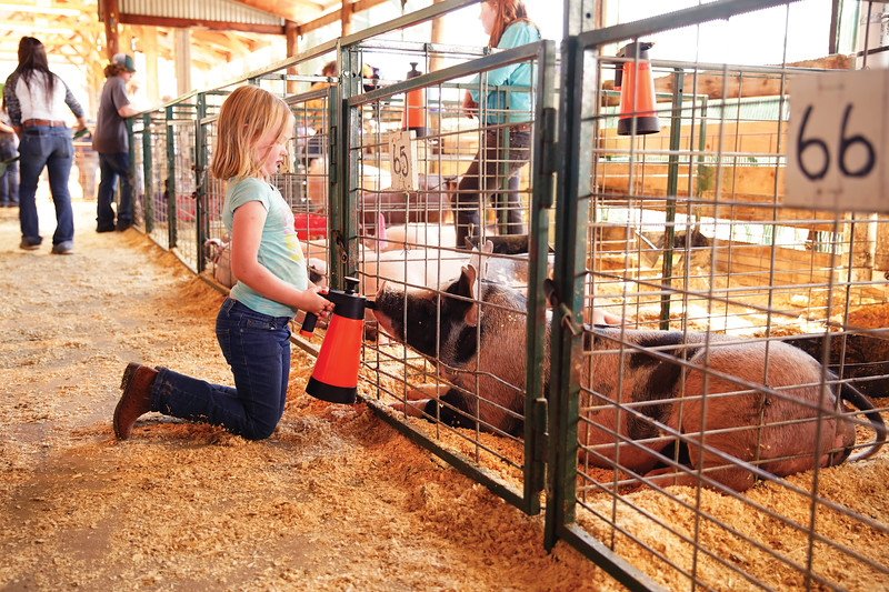 Matthew Gaston | The Sheridan Press <br /> Alexis Williams gives a pig a cold drink on a really hot day at the Sheridan County Fair Thursday, July 30, 2020.