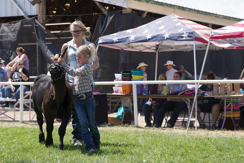 Matthew Gaston | The Sheridan Press <br /> Cloverbud Aubrey Welter, 8, leads her calf into the show ring with a some help from Betty Jerney during the bum calf show at the county fair Saturday, Aug. 1, 2020.