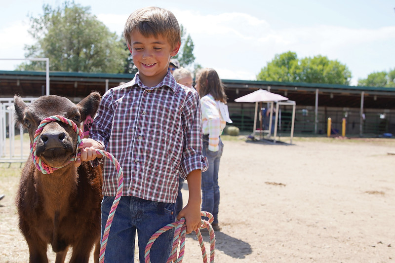 Matthew Gaston | The Sheridan Press <br /> Mason Swinyer, 6, is all smiles before showing his calf, Hope, in the bum calf competition at the Sheridan County Fair Saturday, Aug. 1, 2020. Hope took first place in the bum calf show.