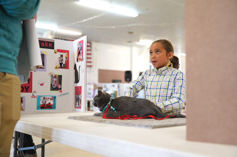 Matthew Gaston | The Sheridan Press   <br /> Kathryn Swinyer, 8, answers questions for judge Tom Terry about her cat, Lucy, during the junior showmanship competition at the Sheridan County Fair Wednesday, July 29, 2020. Swinyer took first place in her first ever cat show.