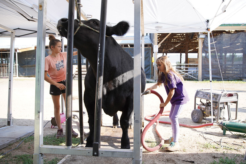 Matthew Gaston | The Sheridan Press <br /> Harper Hancock, 9, right, works on drying. off her cow after bathing with a little help from her big sister Lily Hancock at the Sheridan County Fair Saturday, Aug. 1, 2020.