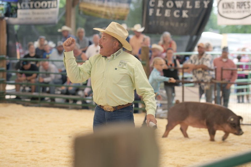Ryan Hanrahan | The Sheridan Press <br /> Auction assistant Billy Craft yells after receiving a bid at the Sheridan County Fair livestock auction Monday, Aug. 3, 2020. Just under $500,000 was spent at the auction.