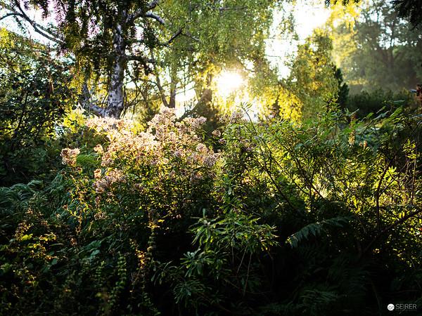 Botanischer Garten der Universität Wien im Herbst