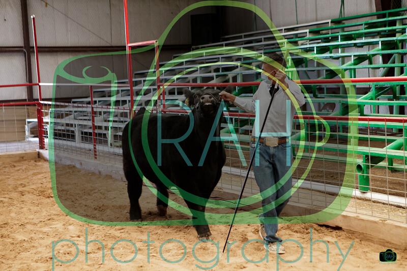 51st Bi-County Market Steers Show