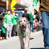 What's a St. Patrick's Day parade without its canine mascot, the Irish wolfhound?
