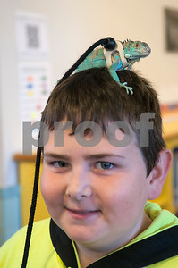 Justus Craft, 11, sports a blue lizard named Blueberry on his head during the critter encounters event at Buzzard Fest Saturday Feb. 6, 2016 in Grand Saline.  (Sarah A. Miller/Tyler Morning Telegraph)