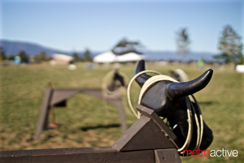 Ropping Steers