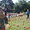 2nd Annual Marital Cottle Harvest Festival