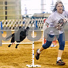 Gumbeaux and Valerie Holstead compete at the Tyler Obedience Training Club USDAA Agility Trials at Texas Rose Horse Park in Tyler, Texas, on Friday, March 30, 2018. (Chelsea Purgahn/Tyler Morning Telegraph)