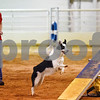 Pam Smith and her dog Ruckus compete at the Tyler Obedience Training Club USDAA Agility Trials at Texas Rose Horse Park in Tyler, Texas, on Friday, March 30, 2018. (Chelsea Purgahn/Tyler Morning Telegraph)