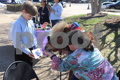 A pony from Thaat Farm paints a picture for a young student at the Coffee and Donuts Festival, Downtown Sqaure.