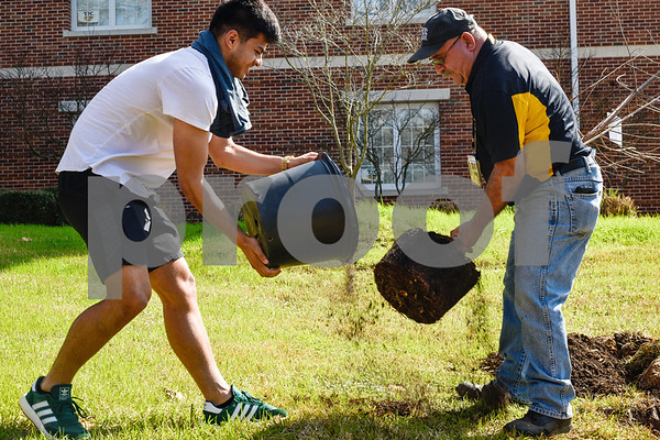 Sergio Saucedo helps Phil Weber pull a tree out of a pot during an Arbor Day event at Tyler Junior College in Tyler, Texas, on Monday, March 5, 2018. Tyler Junior College, the Tyler Trees Committee, Keep Tyler Beautiful and the Tyler Parks and Recreation Department hosted a tree planting event to celebrate Arbor Day. (Chelsea Purgahn/Tyler Morning Telegraph)