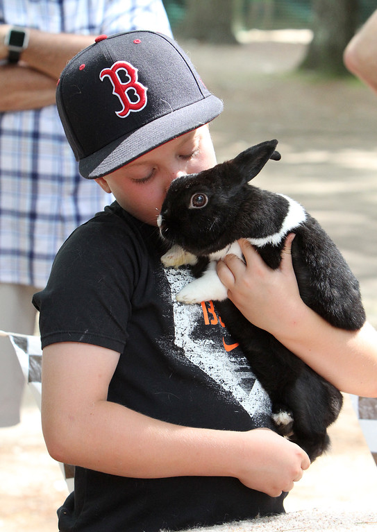 . Middlesex County 4-H Fair. Bobby Evans, 10, of Groton, with Papi, his Dutch-mini-rex rabbit. (SUN/Julia Malakie)