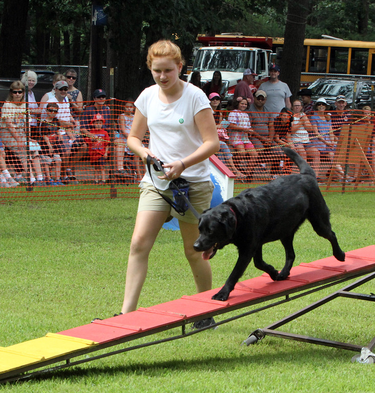 ". Middlesex County 4-H Fair.  Alex Butters, 12, of Chelmsford, with her dog Hazel, in the ""Try It\"" round of agility for first time dogs. (SUN/Julia Malakie)"