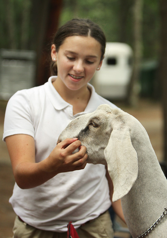 . Middlesex County 4-H Fair. Danielle Walburn, 13, of Tyngsboro with her Nubian goat, Desert. (SUN/Julia Malakie)