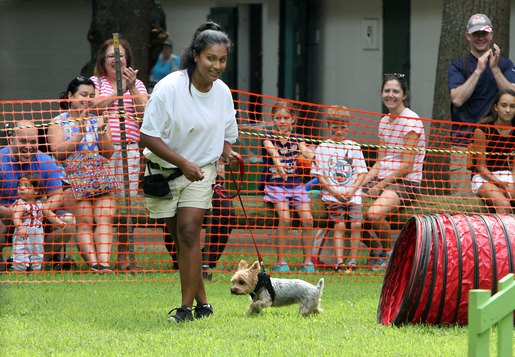. Middlesex County 4-H Fair. Sana Patel, 15, of Chelmsford, leads her Yorkshire terrier, Marley, on the agility course. It was Marley\'s first time competing. (SUN/Julia Malakie)