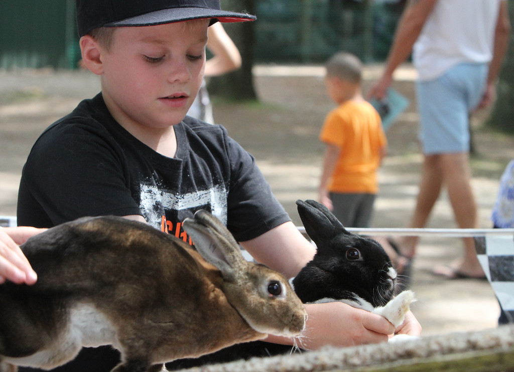 . Middlesex County 4-H Fair. Bobby Evans, 10, of Groton, with Papi, his Dutch-mini-rex rabbit, right. (SUN/Julia Malakie)