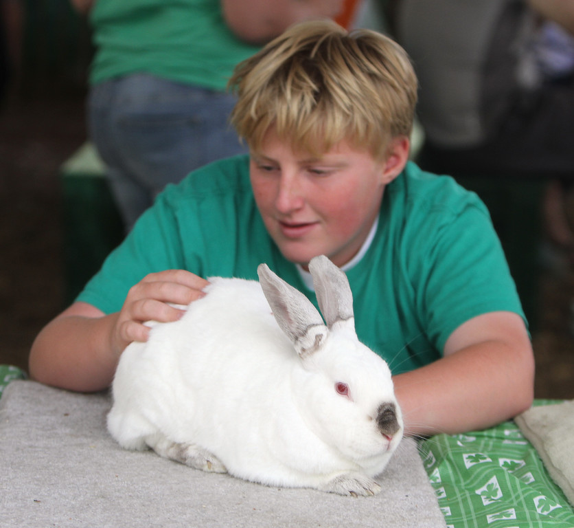. Middlesex County 4-H Fair. Graham Nielson, 13, of Westford, with Lincoln, his Californian rabbit. (SUN/Julia Malakie)