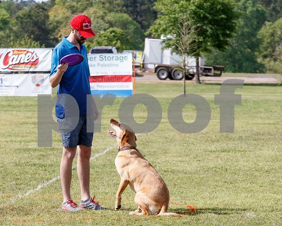 Azalea Dog Disc Competition/photo by Don Spivey