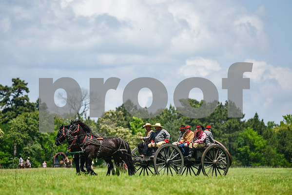 Horses bring a cannon on the field during the fifth annual 1836 Chuckwagon Race presented by Diamond Ranch in Neches, Texas, on Friday, April 21, 2017. Hundreds came to the event to see cattle roping, horse racing, live music and more. (Chelsea Purgahn/Tyler Morning Telegraph)